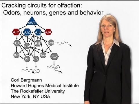 Genes, the brain and behavior